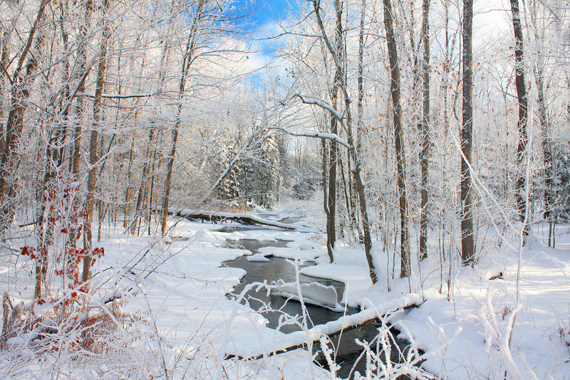 Picture of trees and creek covered in snow.